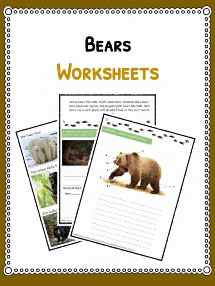 Grizzly Bear Facts  Information   Worksheets For Kids