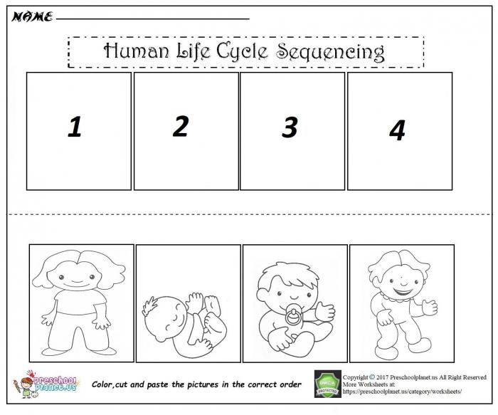 Human Life Cycle Worksheets 99Worksheets