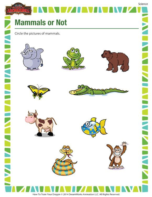 Mammals Or Not  Science Printable For Kindergarten On Mammals