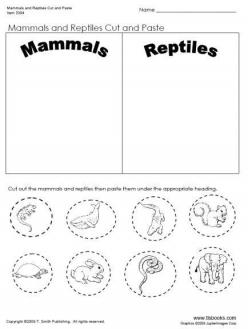 Mammals For Kids
