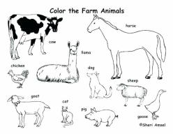 Animal Habitats Coloring