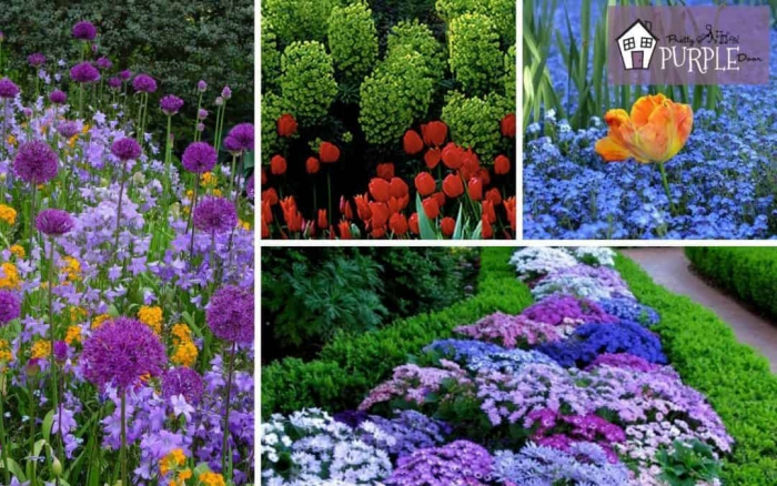 Simple Secrets For Creating Garden Color Schemes
