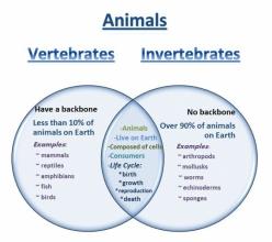 Compare And Contrast: Vertebrates And Invertebrates