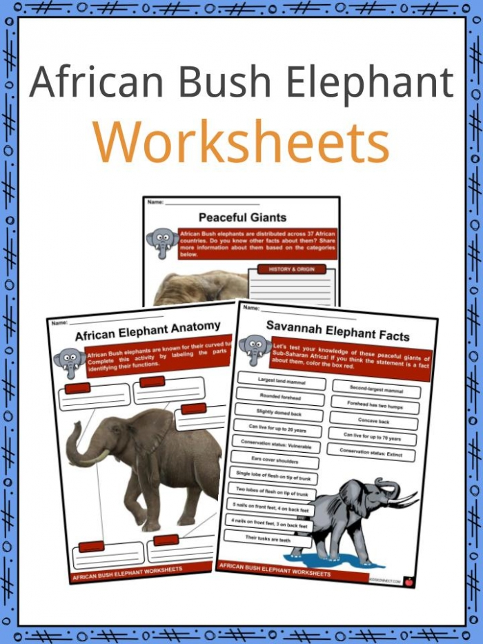 African Bush Elephant Facts  Worksheets   Taxonomy For Kids