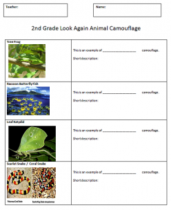 Animal Camouflage For Kids