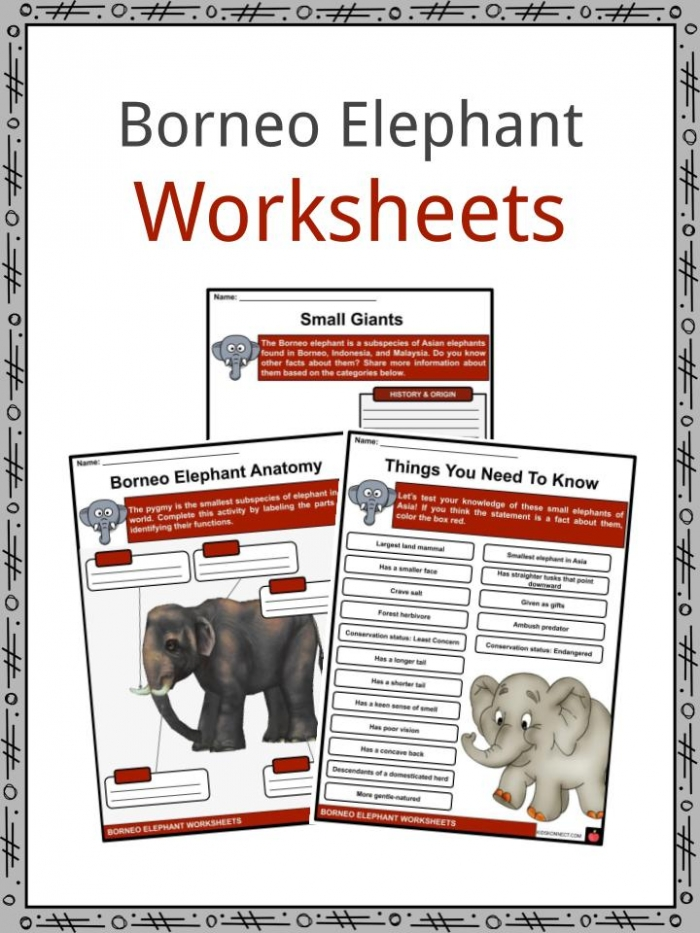 Borneo Elephant Facts  Worksheets  Taxonomy   Appearance For Kids