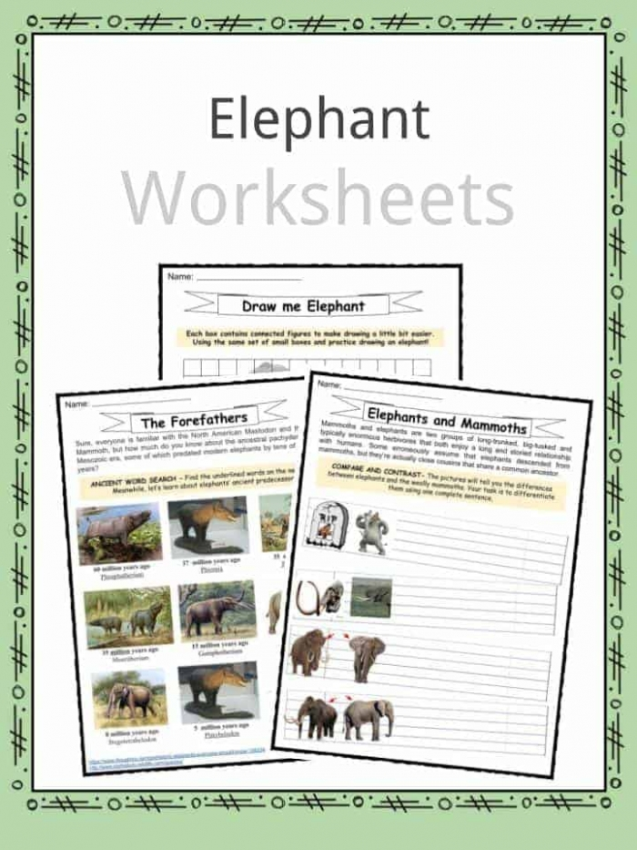 Elephant Facts  Worksheets  Habitat And Information For Kids
