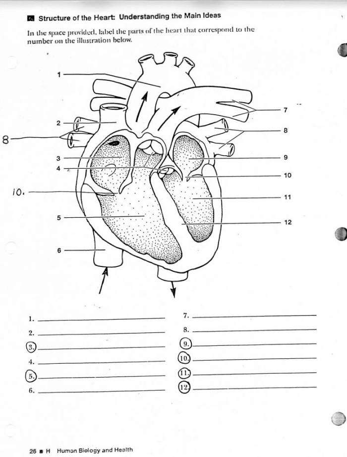 Human Anatomy Labeling Worksheets Tag Label The Heart Diagram