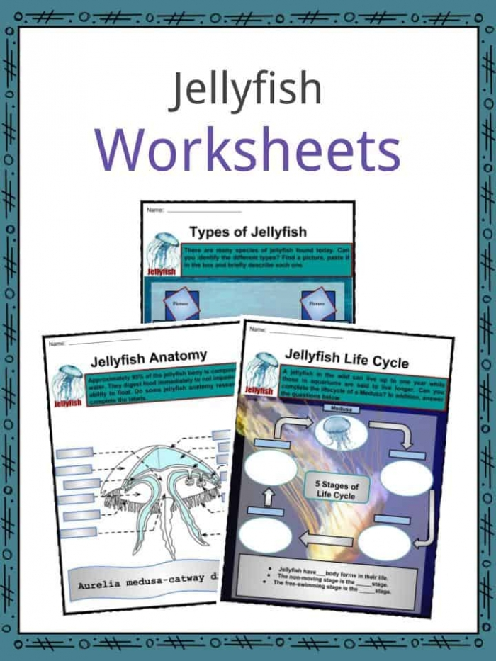 Jellyfish Facts  Worksheets  Habitat  Types   Body Parts For Kids