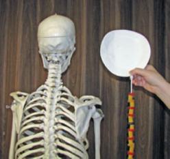 Spine Science: Got Backbone?