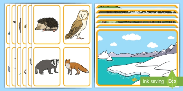 Animals And Their Habitats Matching Activity Teacher Made To