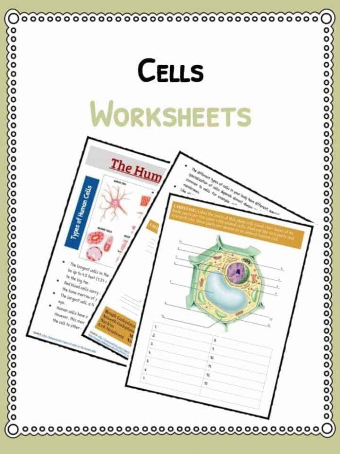 Cell Facts  Information   Worksheet