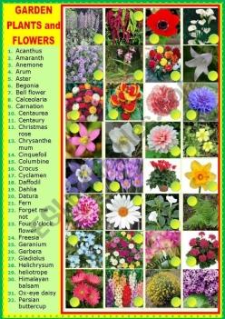Plant A Flower Garden