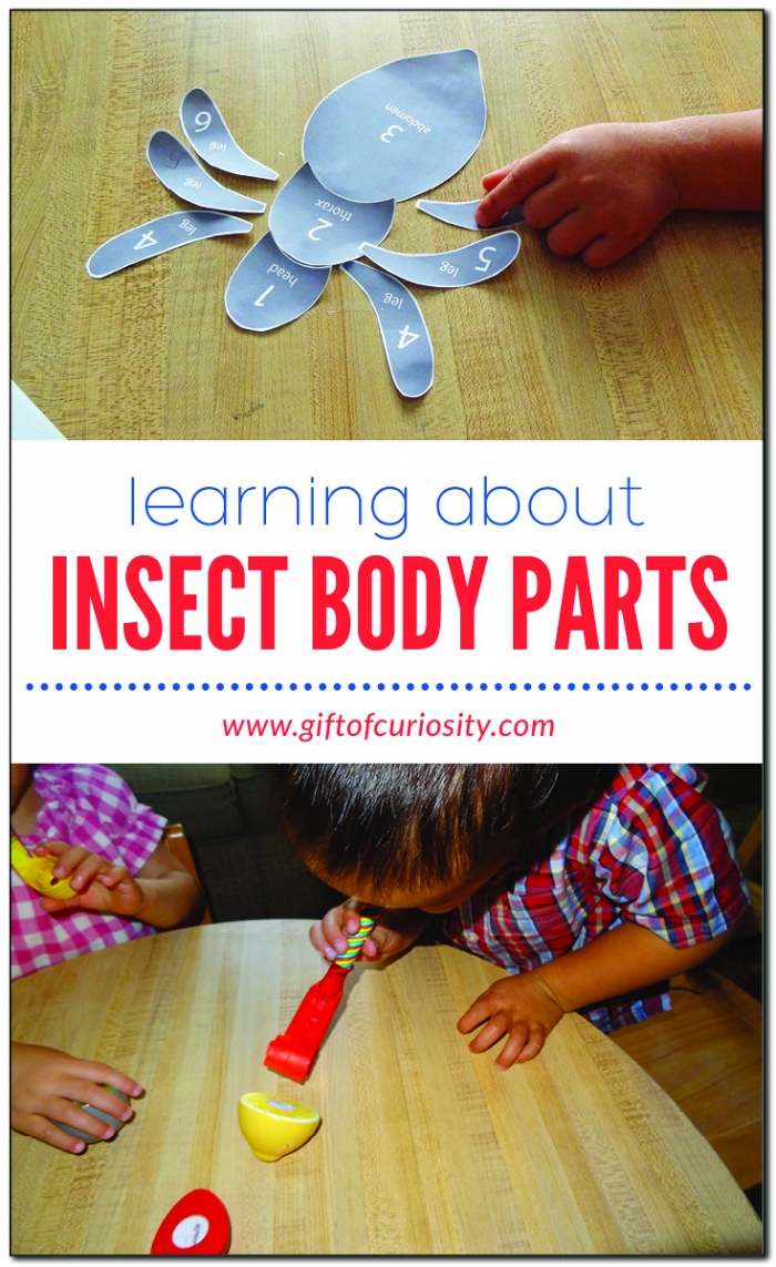 Learning About Insect Body Parts Free Printable