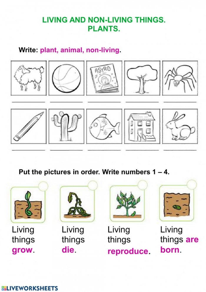Living Things And Plants Worksheet