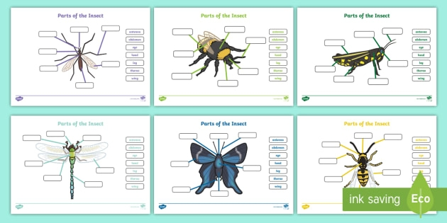 Parts Of The Insect Worksheets Teacher Made