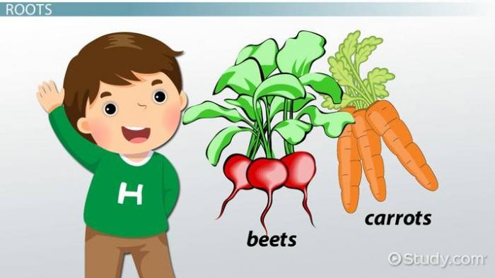 Plant Parts Lesson For Kids