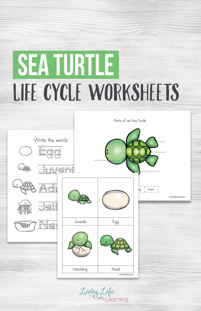 Sea Turtle Life Cycle Worksheets For Kids