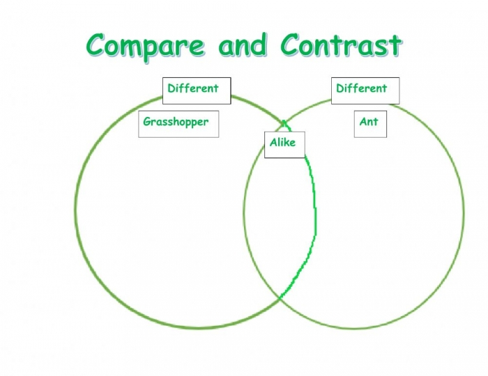 Compare And Contrast Template Worksheet