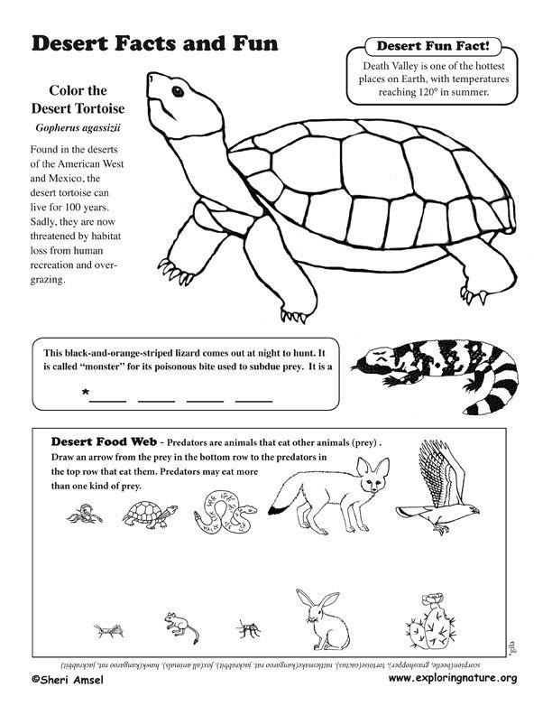 Desert Activity Sheet