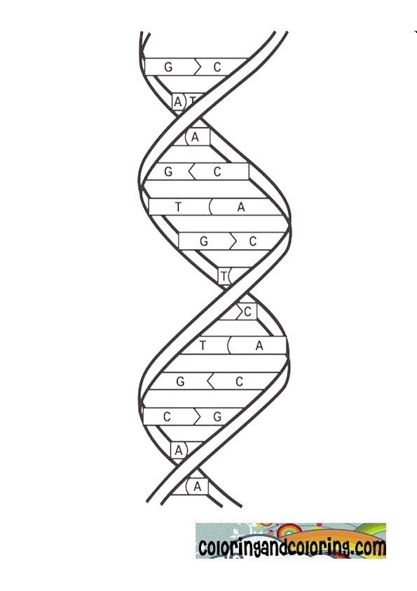 Dna Coloring