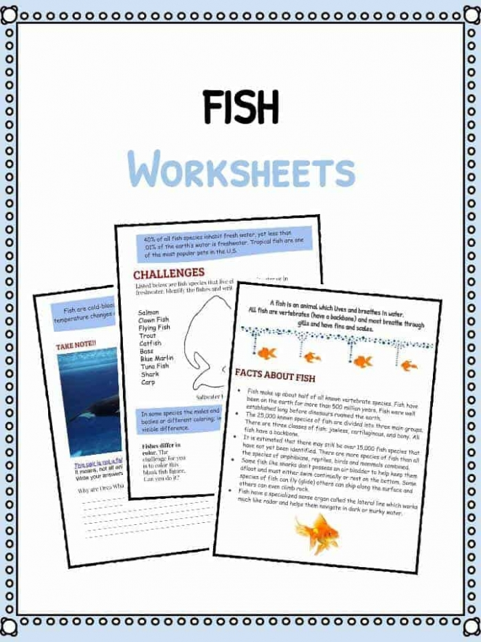 Fish Facts And Worksheets