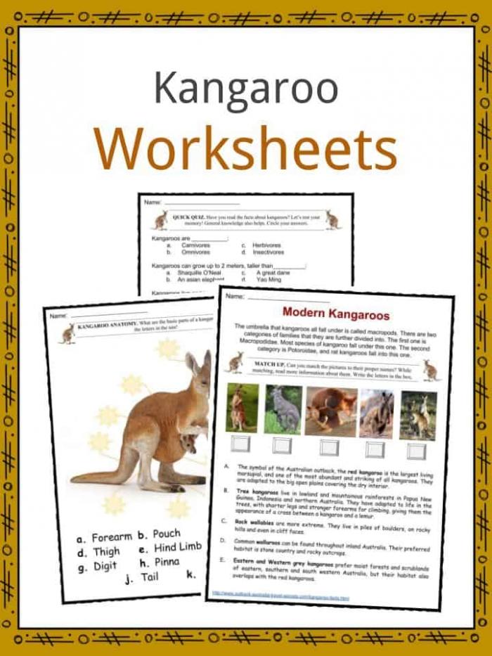 Kangaroo Facts  Worksheets  Habitat  Species   Diet For Kids