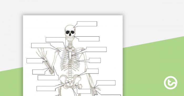 The Human Skeletal System Worksheet