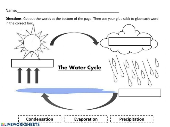 Water Cycle And Pdf Worksheet Science Court Worksheets Want To