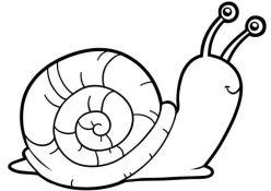 Snail Division