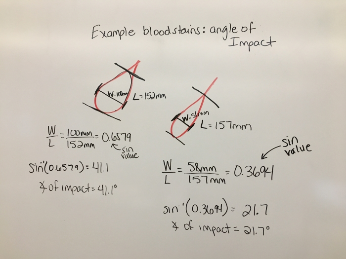 Impact Angle Blood Forensics Worksheets