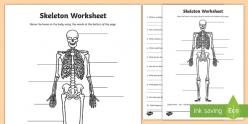 Skeleton Diagram