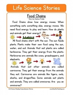 Food Webs Reading Comprehension