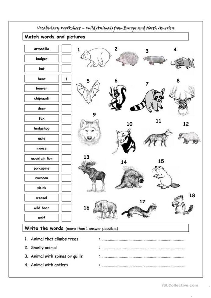 Vocabulary Matching Worksheet Wild Animals From Europe North