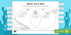 Whale Bonds