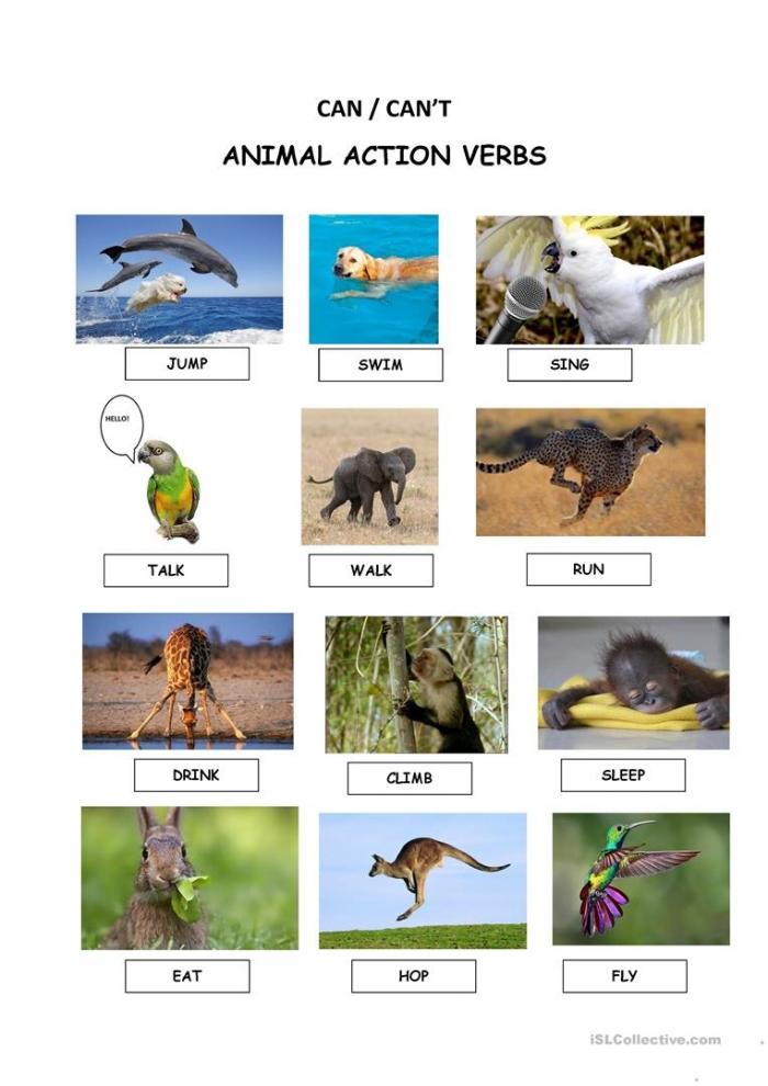 Animal Action Verbs