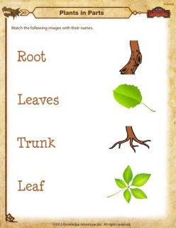 Matching Types Of Leaves
