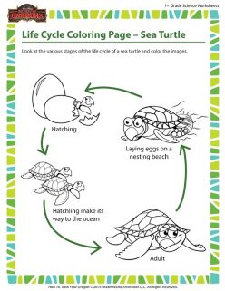 Color The Life Cycle: Turtle