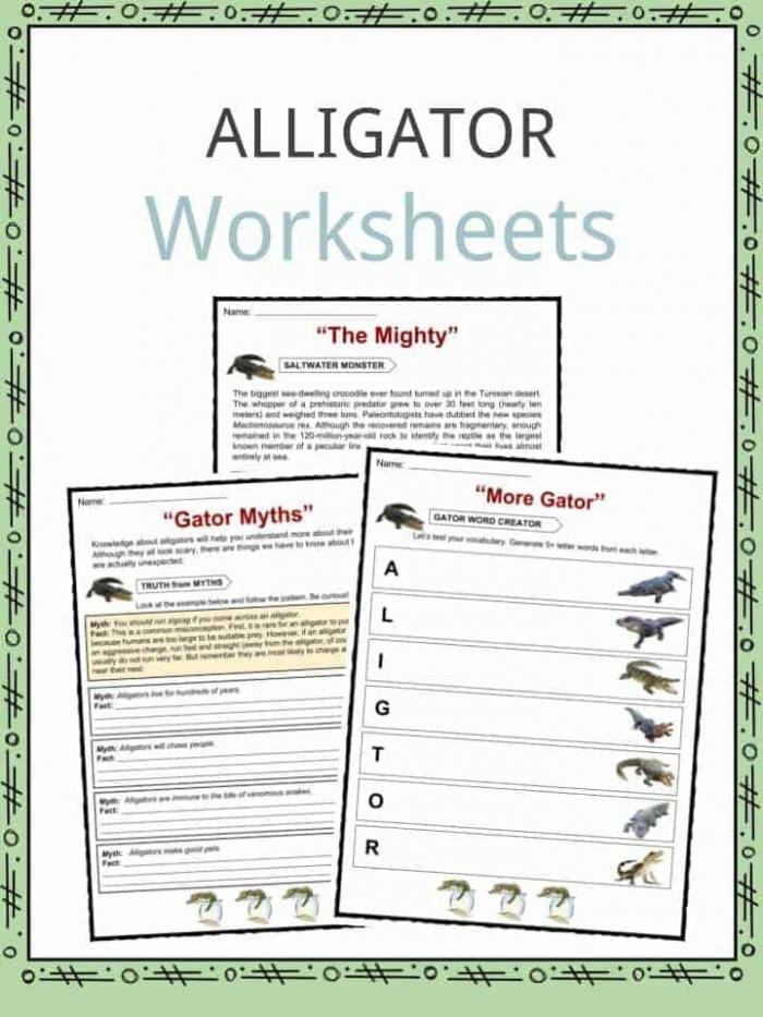 Alligator Facts  Worksheets   Habitat Information For Kids