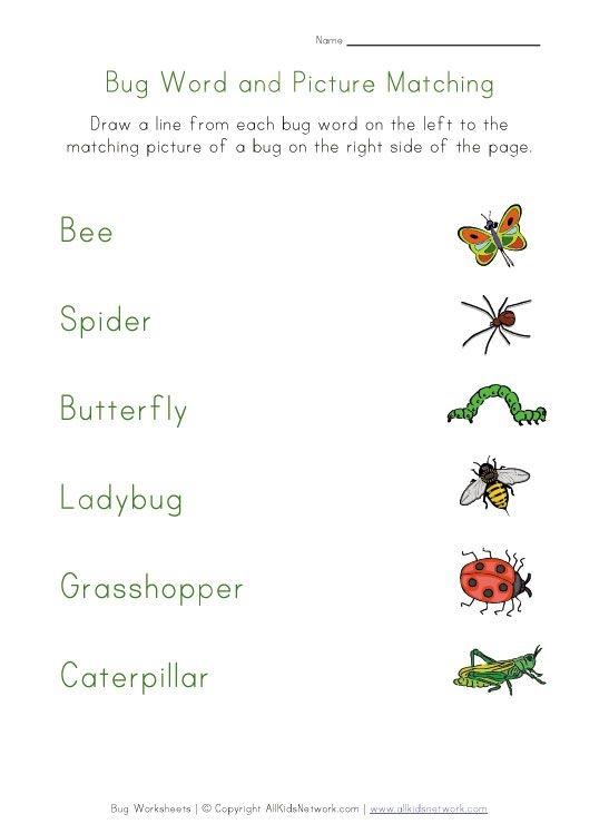 Bugs Matching Worksheet