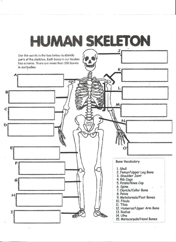 Graph Paper Tool Skeleton Worksheets For Th Grade Free Second