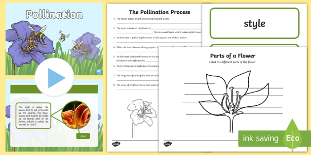 Ks Pollination Lesson Teaching Pack Teacher Made