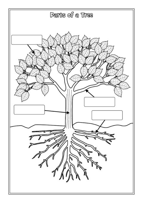 Parts Of A Tree Labelling Worksheets Sb