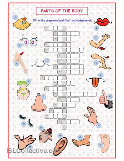 Parts Of The Body Crossword Worksheet