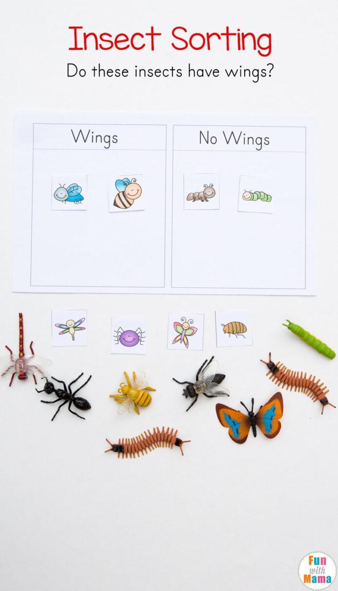 Preschool Insect Theme Sorting Worksheet Bug Activities Fun