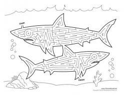 Shark Maze