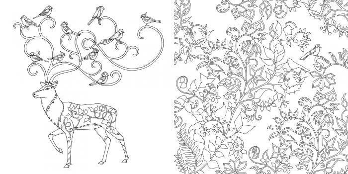 Top  Mean Squirrel Artist Johanna Basford Enchanted Forest
