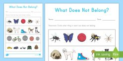 What Doesn't Belong?: Animals And Insects