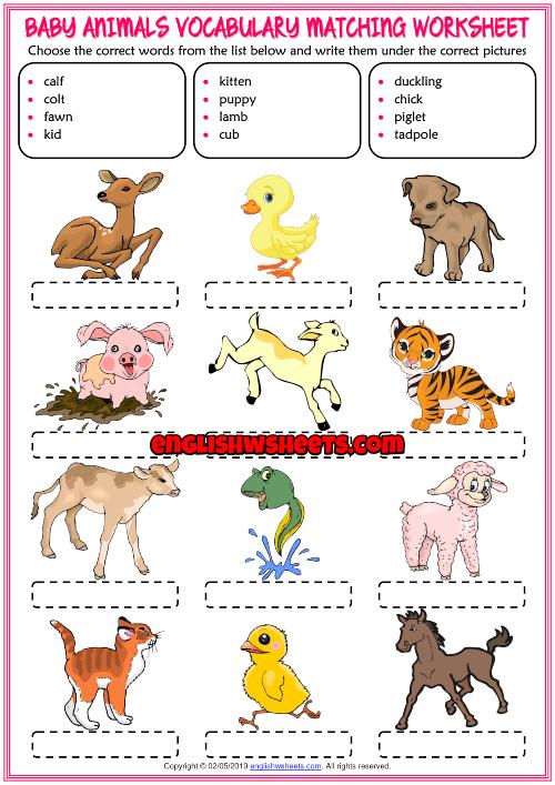 Baby Animals Esl Vocabulary Matching Exercise Worksheet