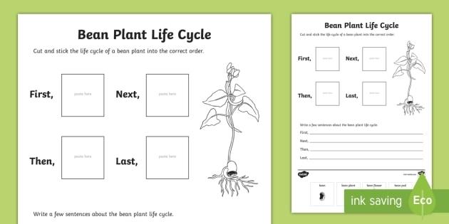 Bean Plant Life Cycle Sentence Writing Worksheet